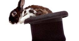 kaninen-fra-hatten