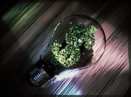 Grønt blålys.jpg